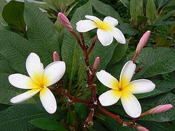 стихи цветы и их знакомые